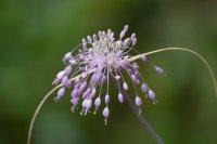 Красотата на малките неща; comments:6