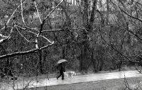 Дъждовно ; Коментари:6