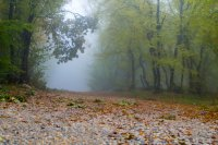 Path to the enchanted forest ; Коментари:5