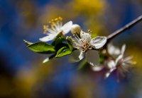 пролетности ; Коментари:7