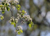 Пролет ; Коментари:1