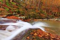 Песента на гората ; Коментари:5