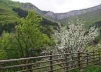 Пролет в Стара планина; comments:4