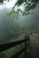 Enchanted forest ; Коментари:6