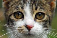 Портрет на едно коте... ; Коментари:5