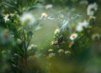 За тревата ,за цветята и още нещо Коментари: 8 Гласували: 24