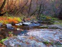 Горската рекичка ; Коментари:7