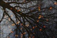 За дървото и неговите листа ; Коментари:9