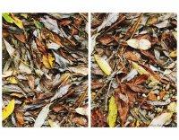 Антология на есента ; Коментари:8