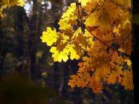 Златната гора... ; Коментари:11
