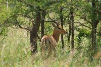 Africa Kenya National Park ; Коментари:4