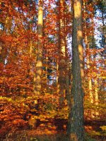 Златна есен ; Коментари:6