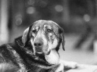 Кучешка мъка... ; Коментари:5