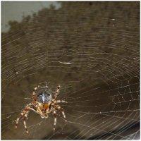 Вселената на паяка ; Коментари:9