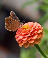Пеперуда Коментари: 29 Гласували: 39