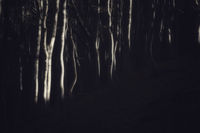Мистичната гора; comments:5