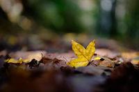 Златна есен; comments:3