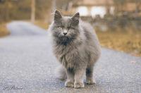 Есенно коте; comments:4