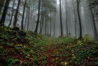 Мъглива гора; Коментари:1