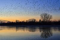 Птици летят към залеза.; comments:7