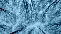 Небесни корени; comments:3
