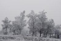 Не от сняг, от студ, навън е всичко побеляло.; comments:18