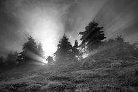 Нека бъде светлина....; comments:19