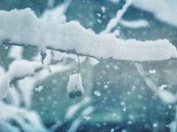 Зимно и коледно...; comments:28