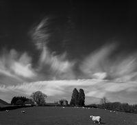 Пейзаж с овца; comments:12