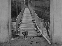 Мостът свърши, а старата година край няма...; comments:9