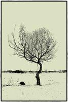 Камъкът и дървото; comments:12