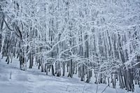 Ледената гора; comments:15