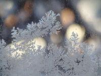 Студът идва; comments:28