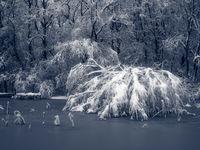 Замръзналото езеро; comments:13