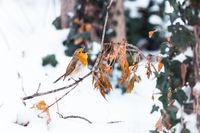 А когато сняг запръска...; comments:7
