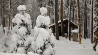 Януарска зима 2017 край Ардино; comments:9