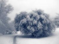 Зимна картина; comments:8