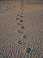 Стъпки в пясъка; comments:2