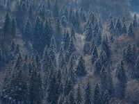 Гора...; comments:4
