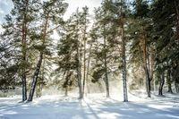 Снежен прах; comments:3