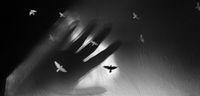 Бягството на птиците II; comments:11