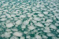 Мозайка - ледено море; comments:11