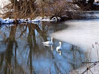 В реката; comments:4