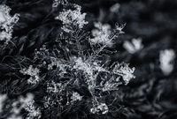 Снежно бижу; comments:11