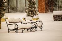 Снежни пейки; Коментари:4