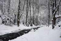 снежно; comments:5