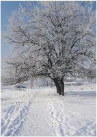 Зима; comments:8