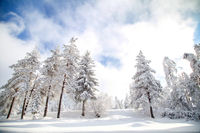 Слънчев зимен ден; comments:5