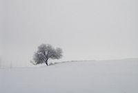 Ако пътник в зимен ден...; comments:6