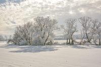 Дори и след най-тежката и студена зима идва пролет...; comments:12
